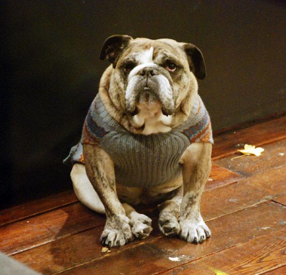 Описание: крупной вязкой схема вязки свитера.