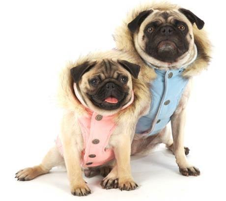 Gt товары для собак gt одежда для собак